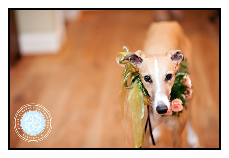 Greyhound Dog Flower Girl