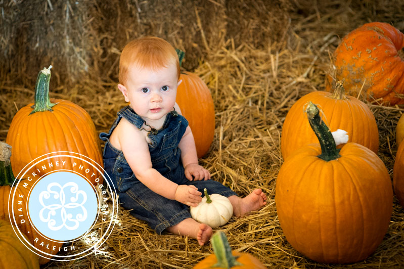 Baby Q's Pumpkin Patch Photography Session
